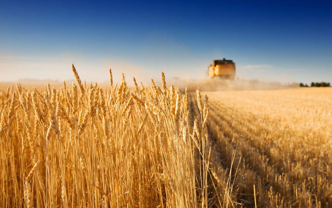 урожай сбор урожая пшеница