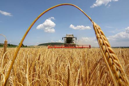 сбор урожая зерновые