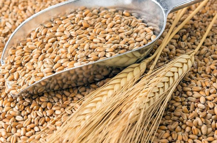 пшеница зерно