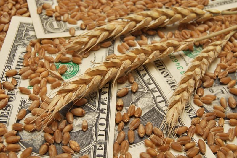 пшеница зерно закупка