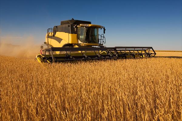 сбор урожая поле зерновые