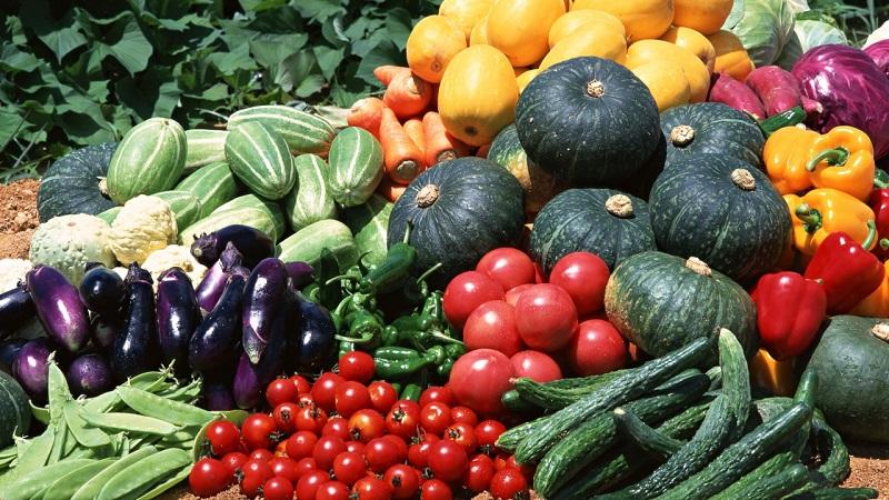 овощи овощеводство
