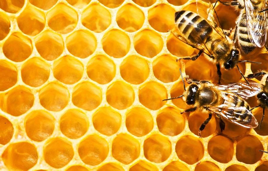пчеловодство мед