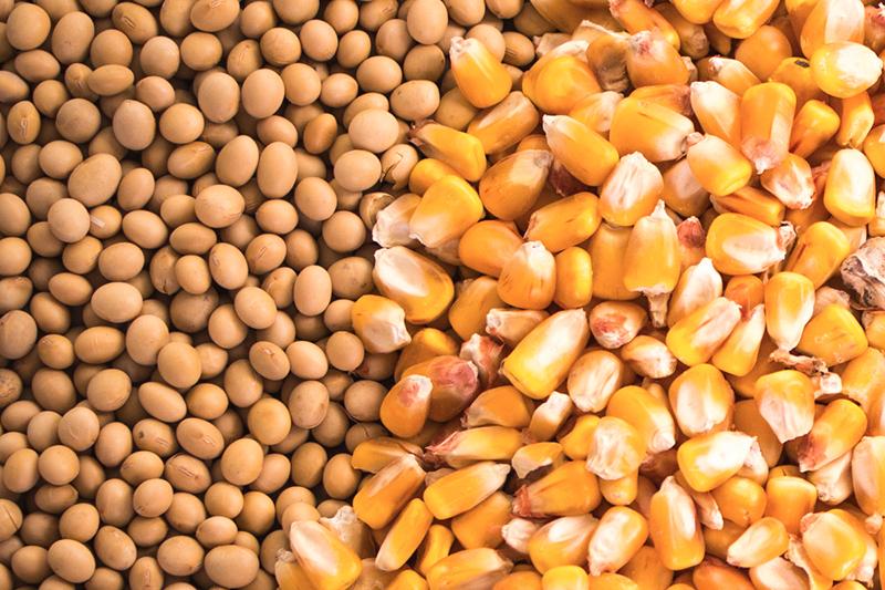 соя кукуруза