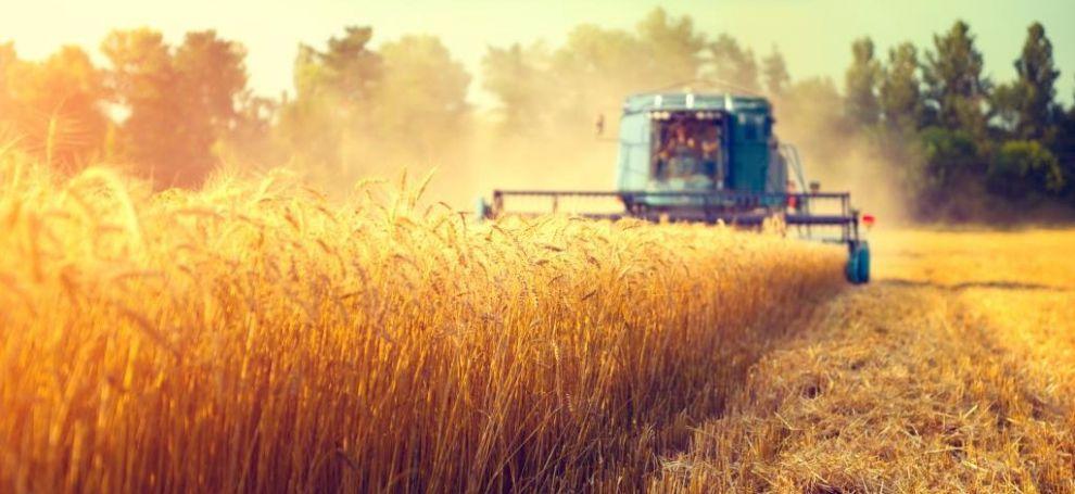 сбор урожая пшеница