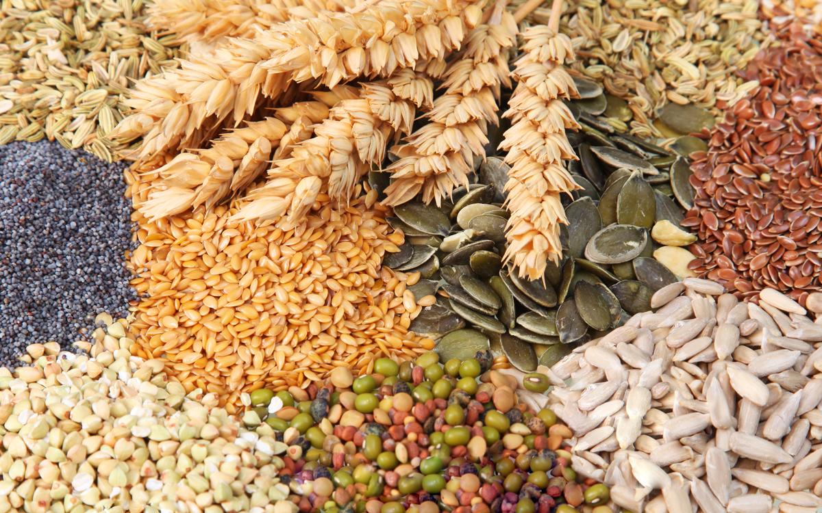 зерновые пшеница grain зерно