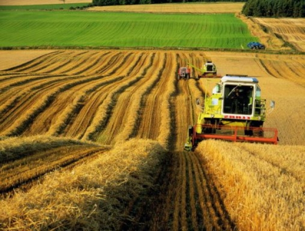 сбор урожая поле