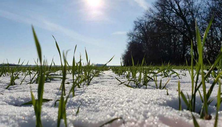 погода озимые поле