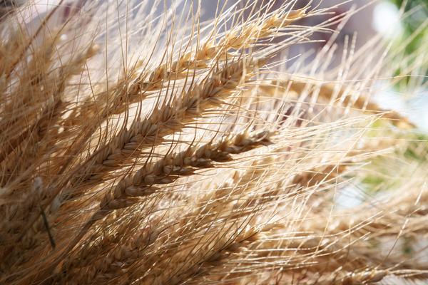 grain зерно