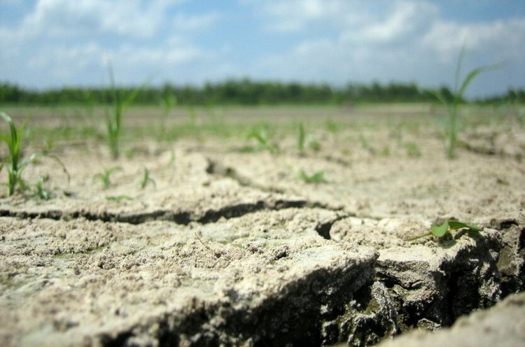 поле засуха погода