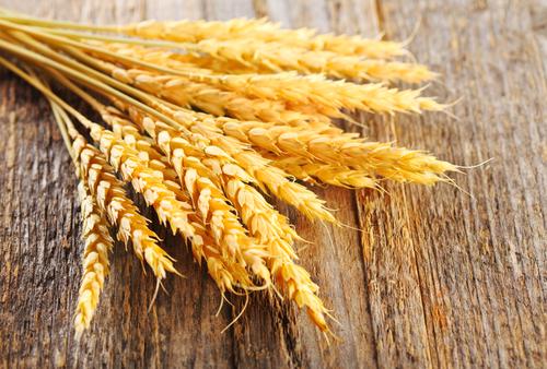 зерно grain