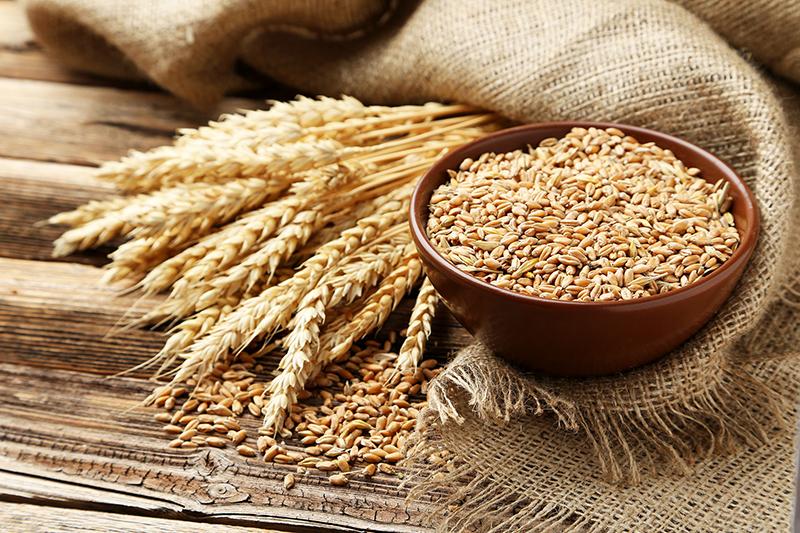 пшеница зерно grain