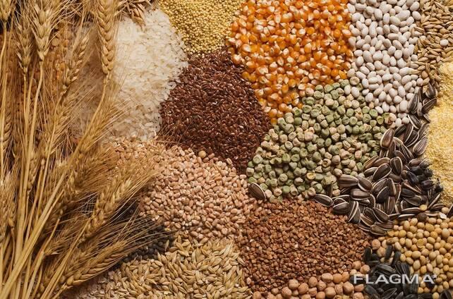 зерно бобовые чечевица grain