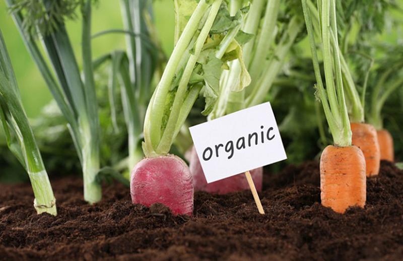 органик эко продукты