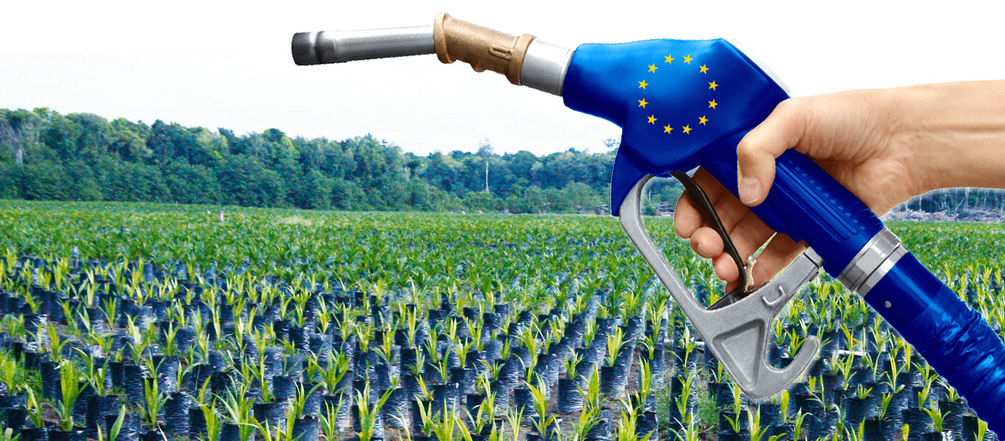 биотопливо дизель экономика кукуруза