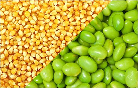 соя soya soy soybeans corn кукуруза
