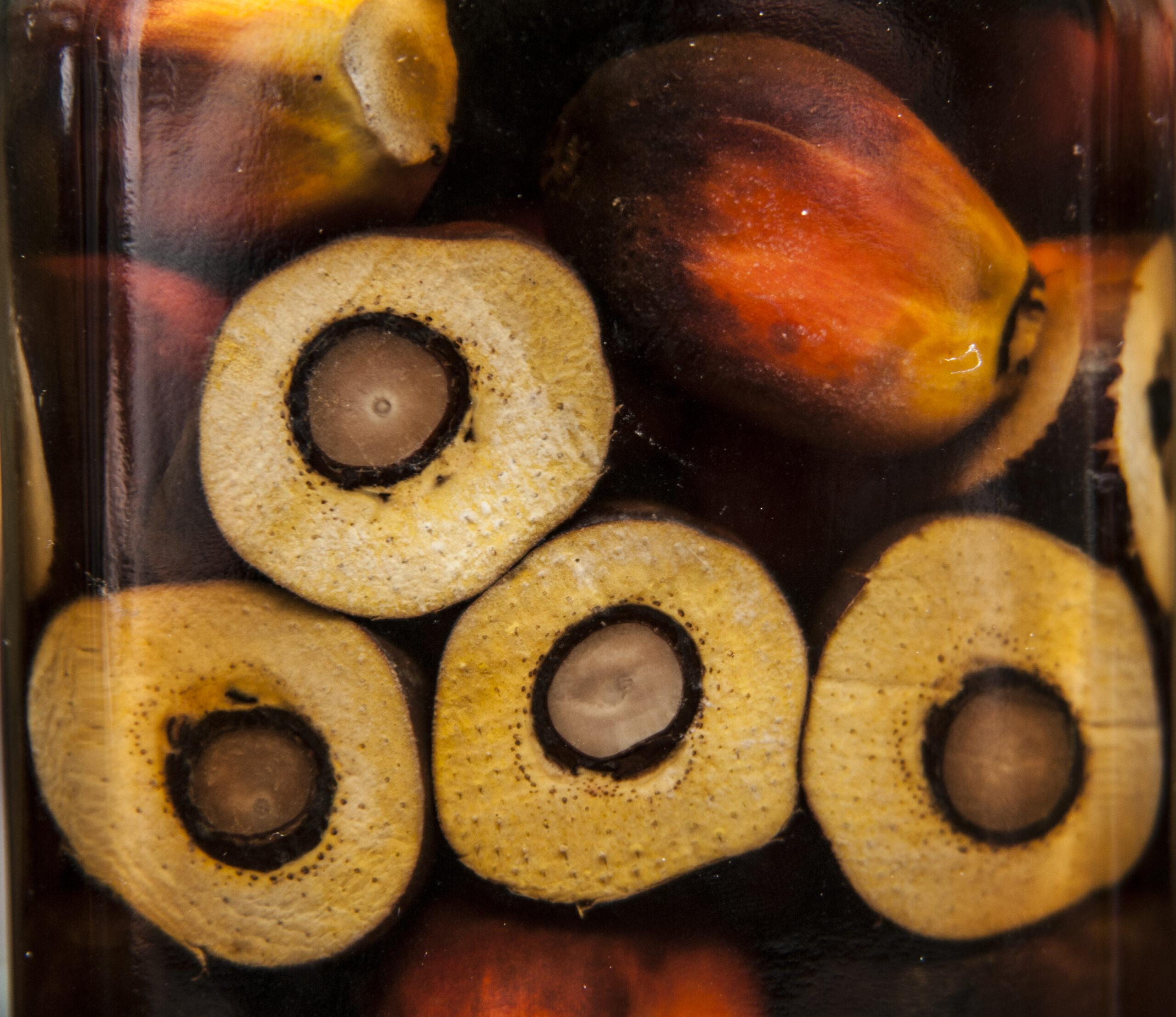 пальмы пальмовое масло palm oil