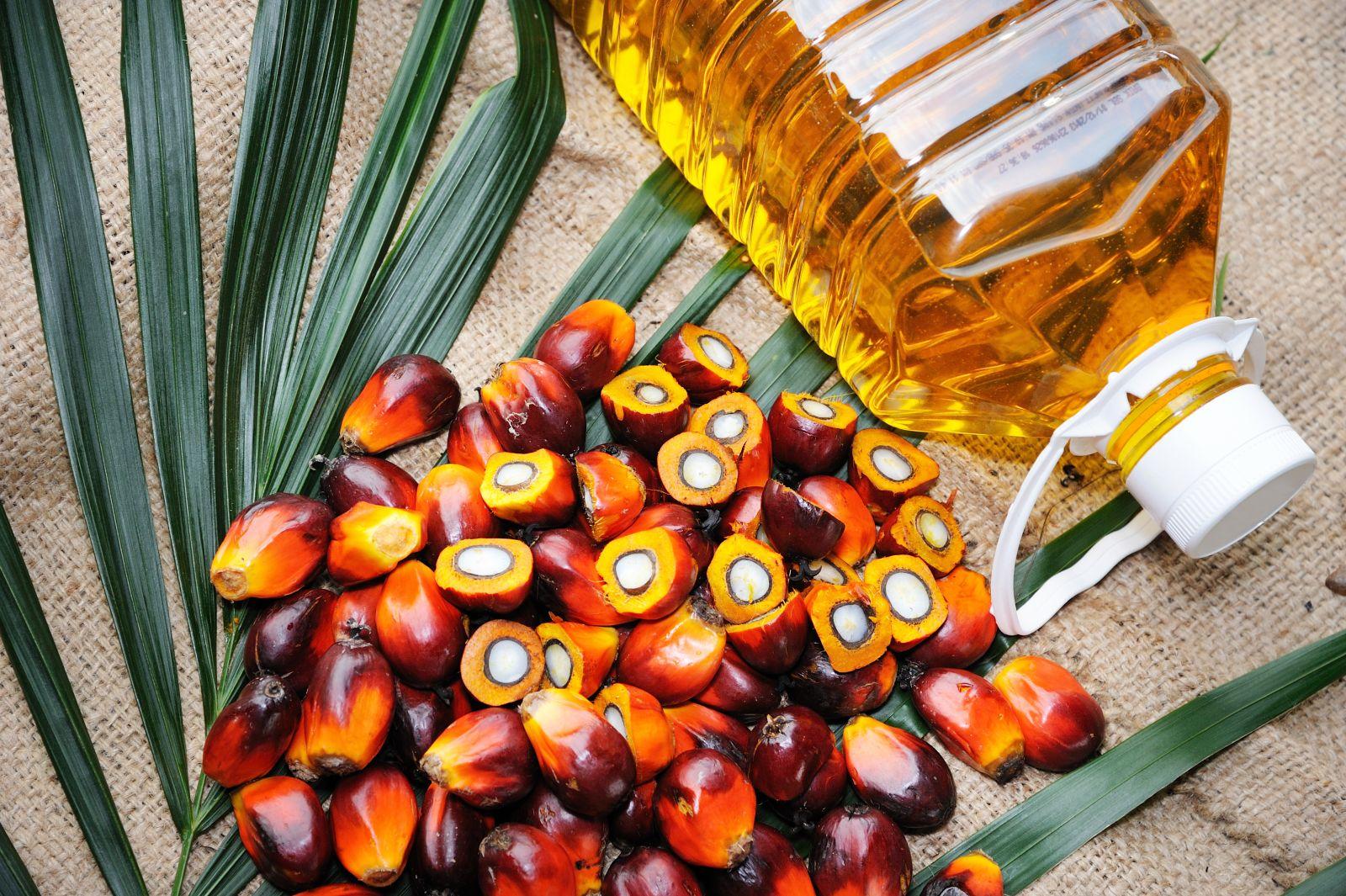 пальма пальмовое масло palm oil