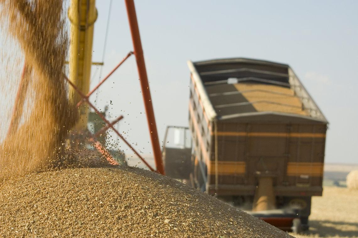 grain truck зерно грузовик логистика