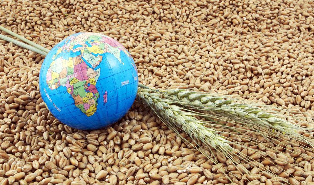зерно grain planet планета