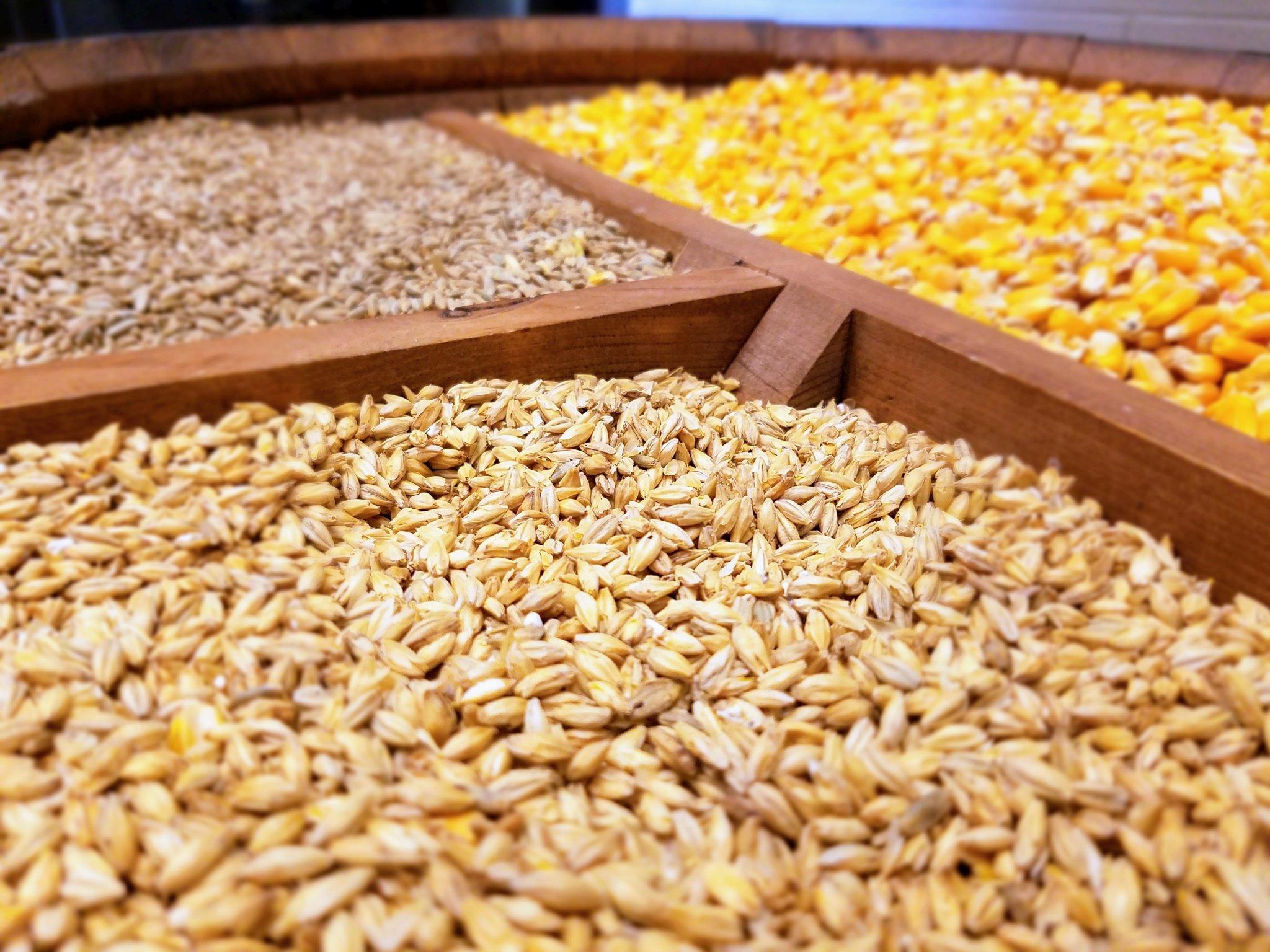 corn кукуруза barley ячмень